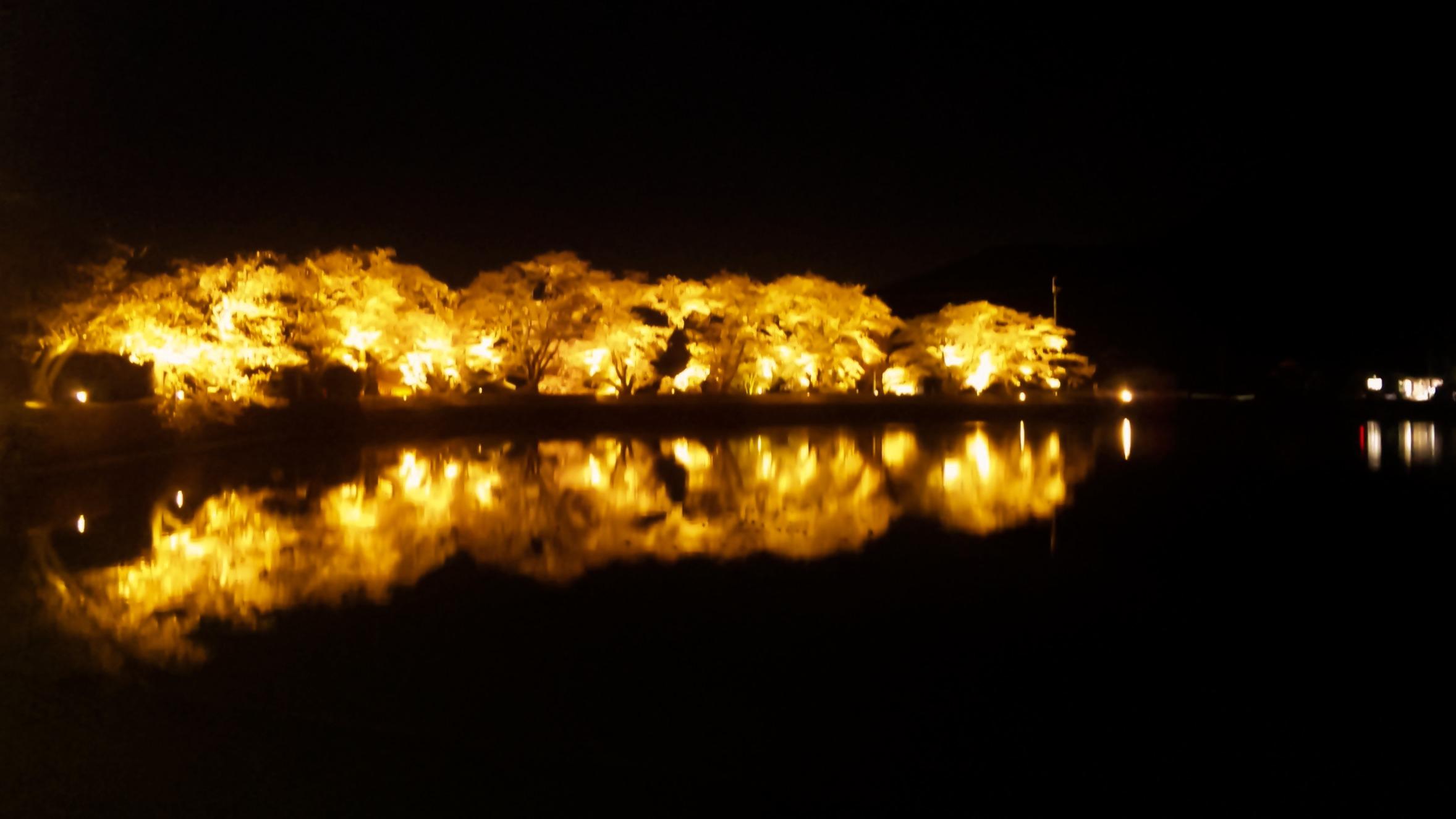 平の沢池 桜のライトアップ