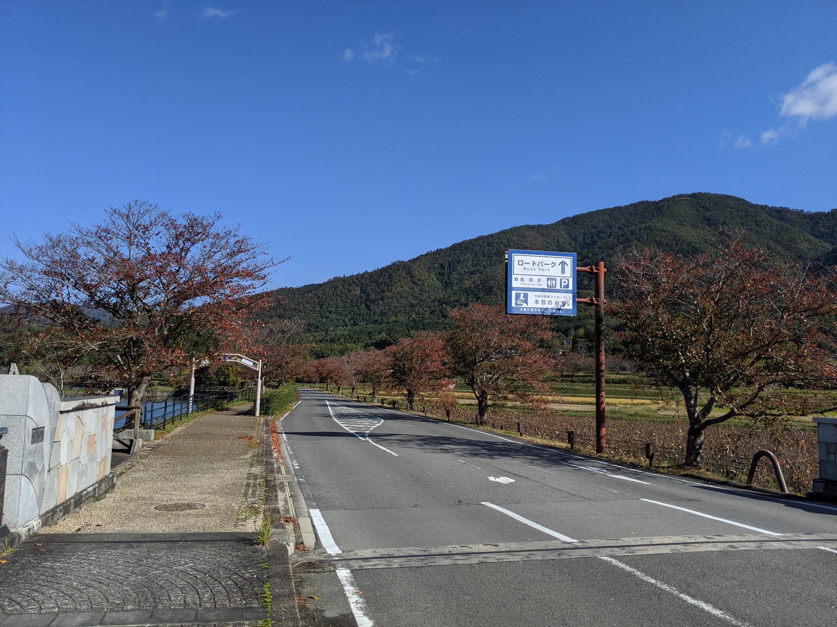 平の沢池紅葉の始まった桜並木